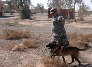 "Staff Sgt. Robert Weddle, a Leesport, Pa., native with the 89th Military Police Brigade, III Corps, and his military working dog, Elmo, successfully return after a ""search"" demonstration, at Contingency Operating Base Speicher, near Tikrit, Iraq, Feb. 12. Military searching dogs utilize their keen senses of smell to locate and identify many locations of possible interest to service members in the field, such as improvised explosive devices and weapon caches.,Pvt. Jesus Aranda"