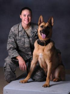 Senior Airman Carrie Dowdy, 379th Expeditionary Security Forces Squadron military working dog handler, and her partner, Ciro, a seven year old German Shepherd, are a clear example that the relationship between dog and handler is one of love and trust. Ciro is an explosive detector dog and is patrol certified. Dowdy and Ciro are deployed from Tyndall Air Force Base, Fla., in support of Operations Iraqi and Enduring Freedom. Staff Sgt. Robert Barney